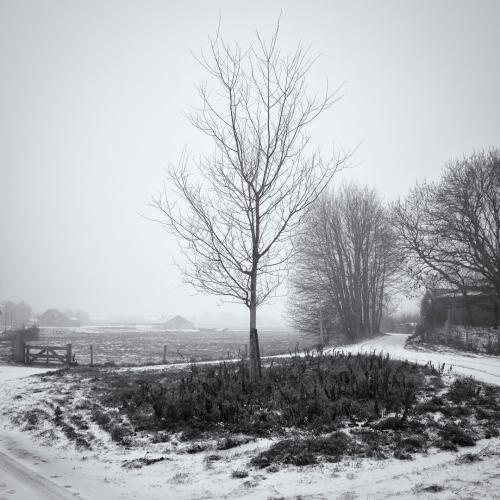 Duinweg-Cieweg in de sneeuw